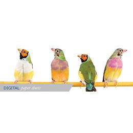 Digital paper Sheets